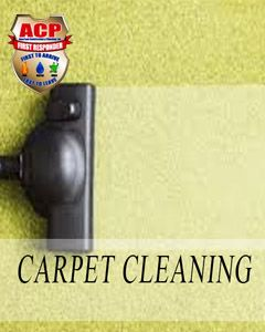Carpet Cleaning Service $100