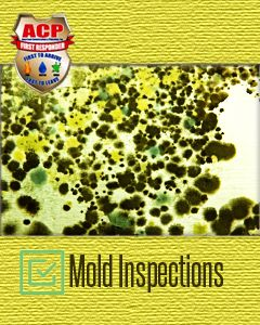 Mold Inspection Service - $100